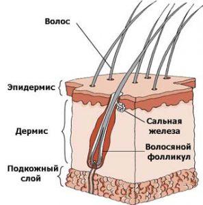 клещ демодекс на коже лица